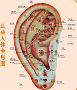 Ear Acupuncture 1